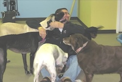 man playing and surrounded by at least 5 different doggy large dogs inside a room with green and blue walls, daycare in myrtle beach